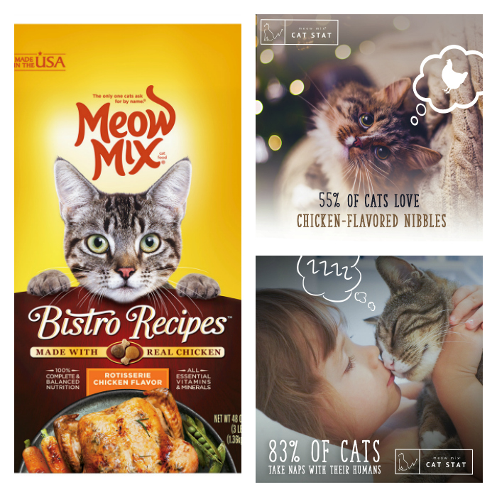 3 Ways To Celebrate Happy Healthy Cat Month collage