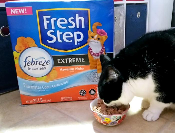 What You Need To Know Before Bringing Home A New Cat litter 2
