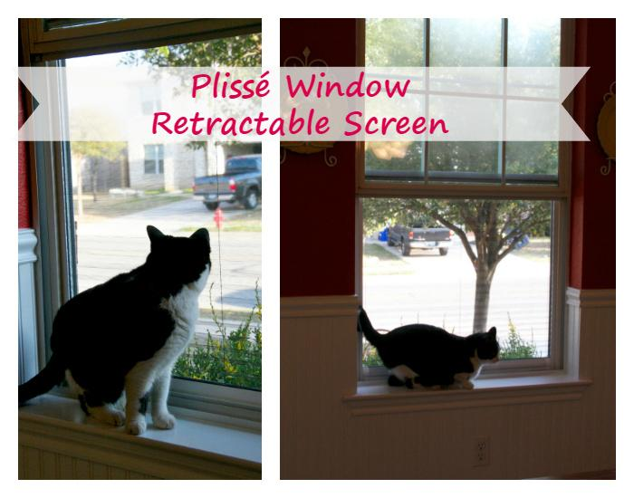How To Keep Your Indoor Cat Healthy And Happy plisse window screen