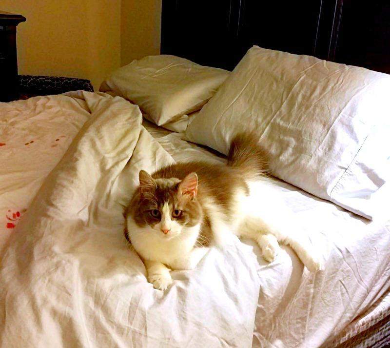 The Most Comfortable Sleep bedThe Most Comfortable Sleep cat