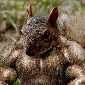 j-si-blog-squirrel