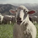 super-bowl-singing-sheep