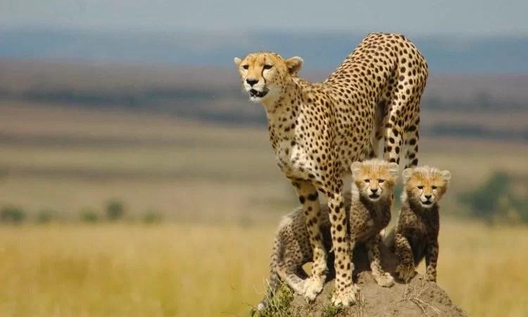 3 Days Kidepo national park Safari - uganda safaris , kidepo safari