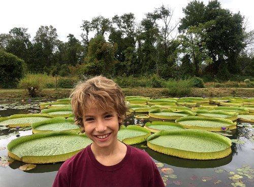 Being handsome by the lily pads