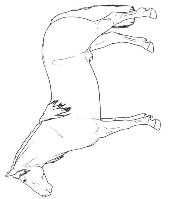 30 Coloring Pages Of Horse Breeds