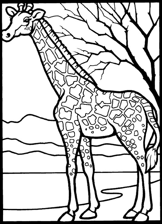 kids n fun com 45 coloring pages of giraffe