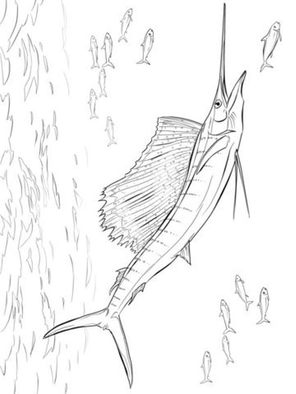 page zwaardvis swordfish animals nature create personal coloring page