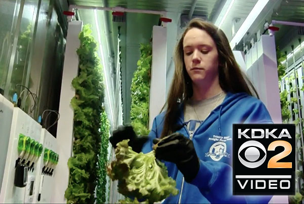 Trinity High School's hydroponic lab teaching students to grow and give