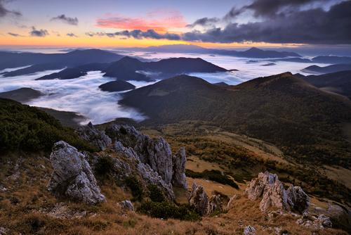 Discover Cloud Forests Home To Horizontal Precipitation