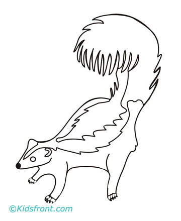 skunk coloring page drawing fill colors to print skunk coloring