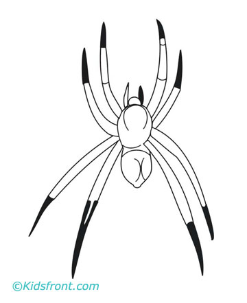 animal 39 s name coloring pages spider