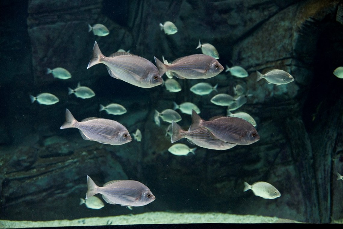 cretaquarium fishes in tank