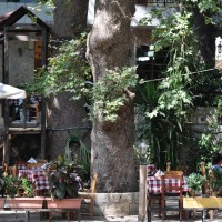 Gefira Café