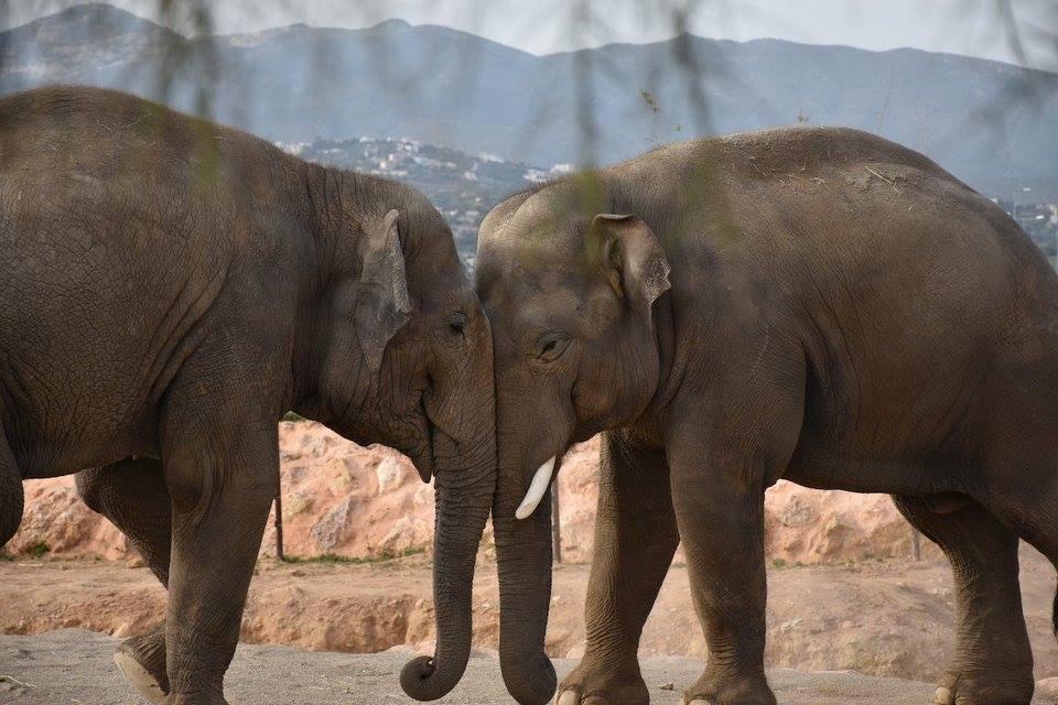 elephants Attica zoo park