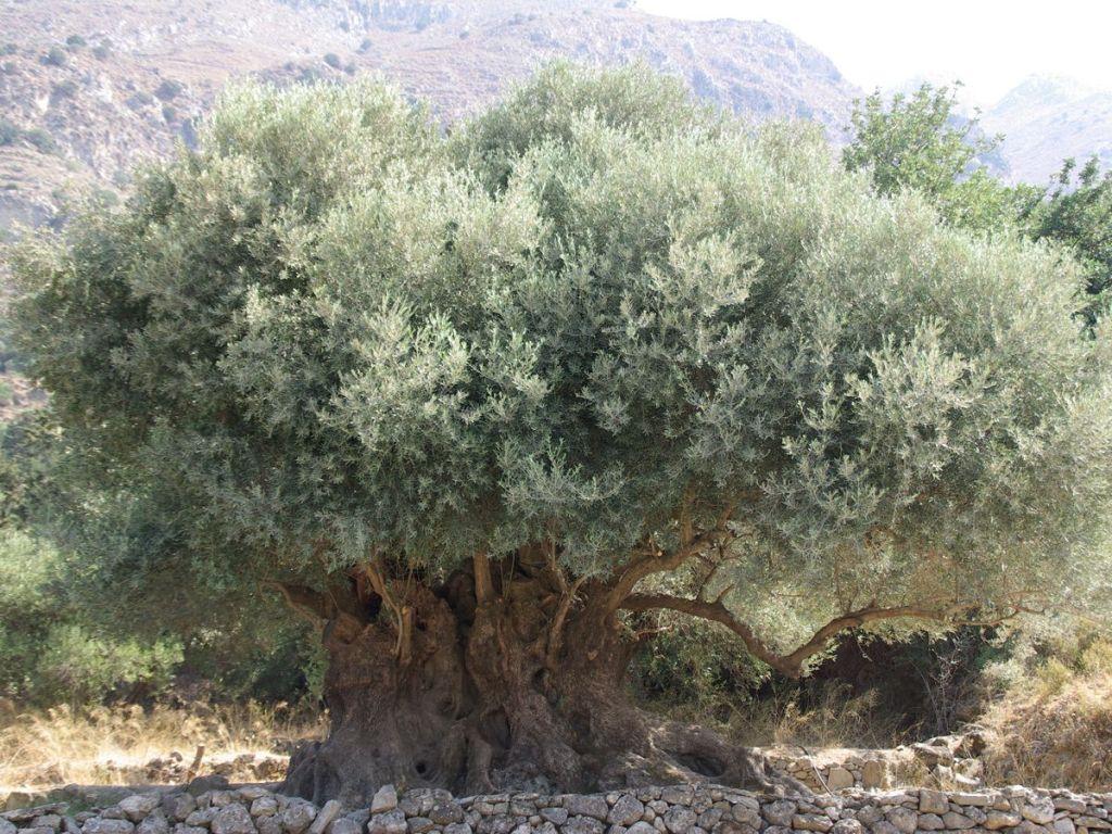 Photo: www.mochlos.eu