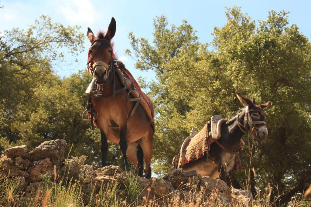 Lasithi plateau dikteon cave donkey riding KidsLoveGreece.com