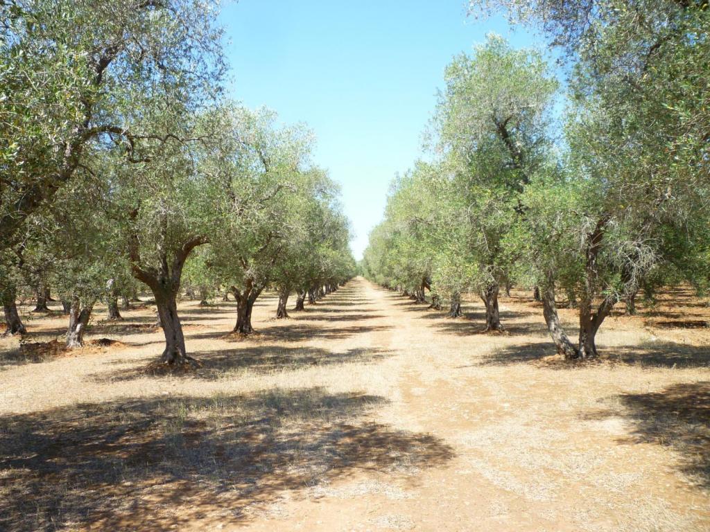 olive oil tasting family tour KidsLoveGreece.com