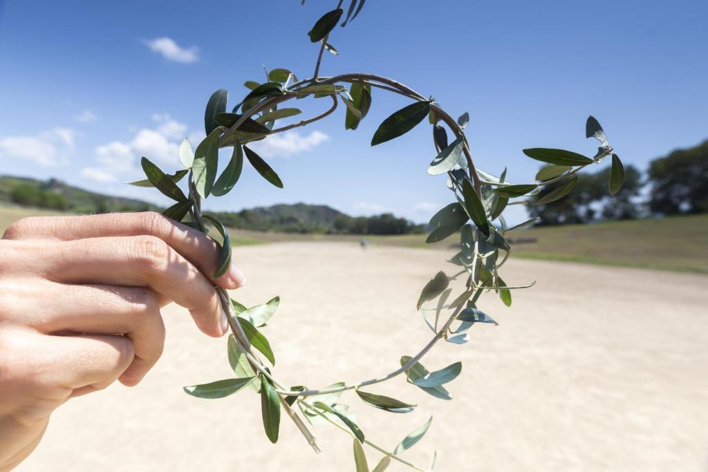 branch olive tree Olympic champions KidsLoveGreece.com