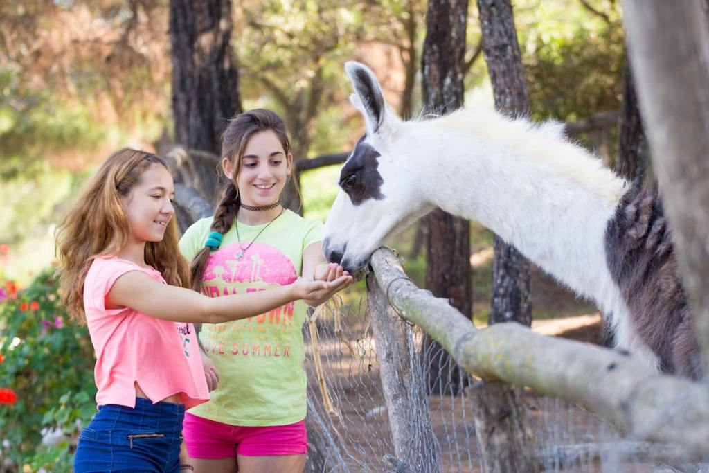 Feeding the animals at the Farma of Rhodes Petting Zoo