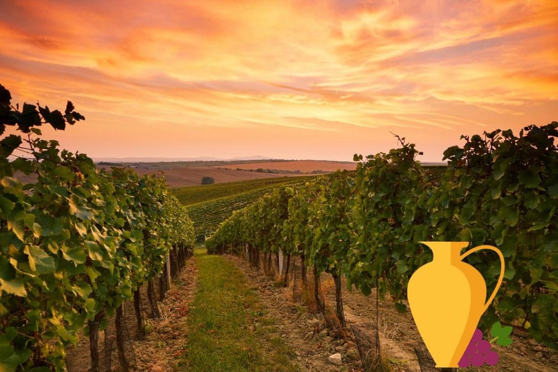 Winery Wineyard Greece CV