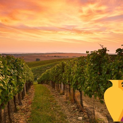 Best Wineries to Visit in Greece with Kids