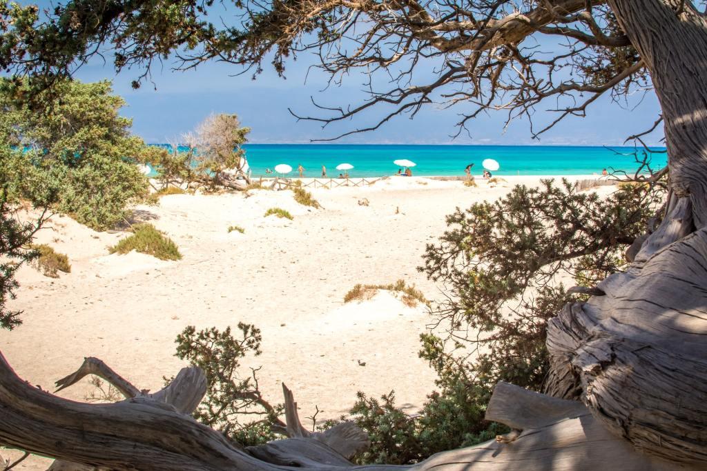 Detail of a dried up cedar tree ,white sand,beach,Chrysi island DP-min