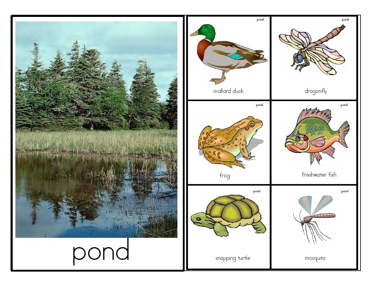 Animal Habitats Activities For 10 Habitats For Early Learners