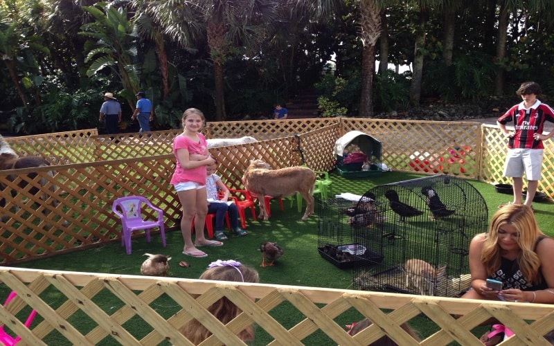 Mdp Planners Petting Zoo Party