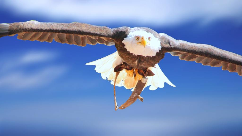 eagle soaring through the air