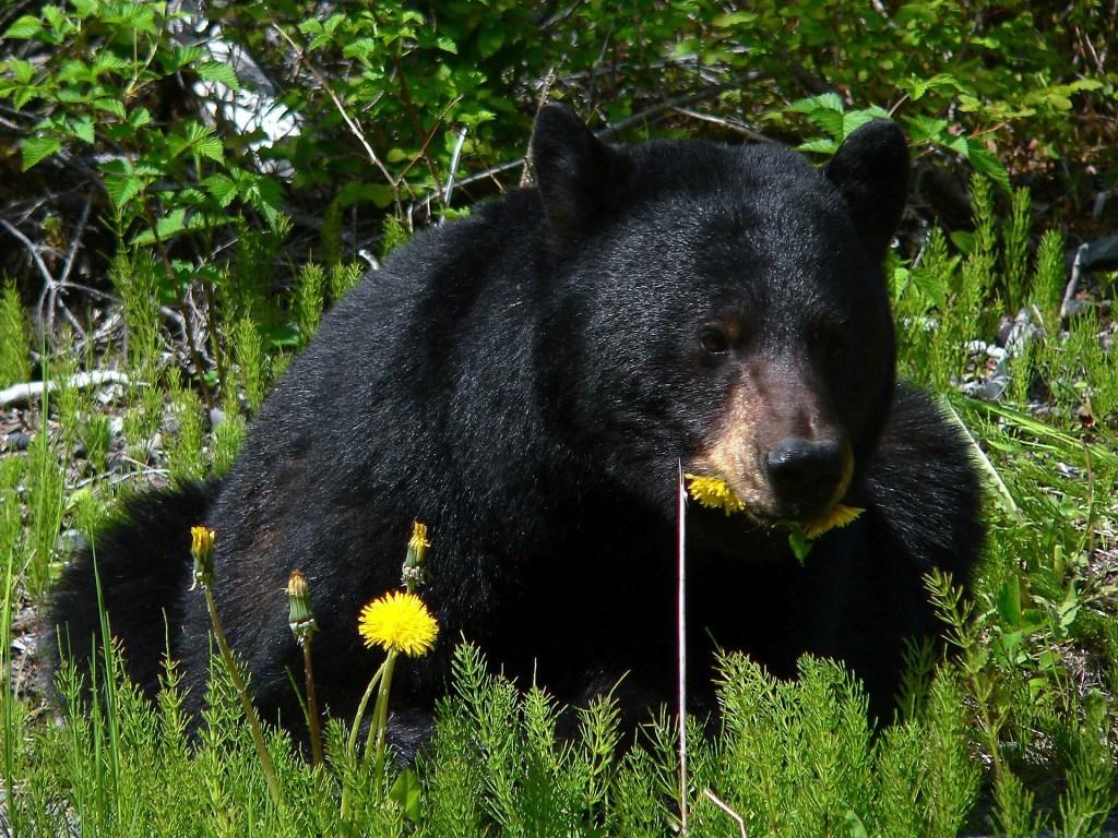 black ears eating flowers