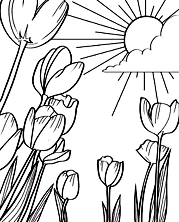 a beautiful sunshine in tulips field coloring page kids play color