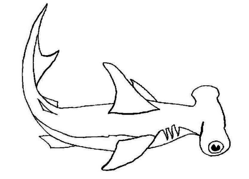 a hammerhead shark on its habitat coloring page a hammerhead