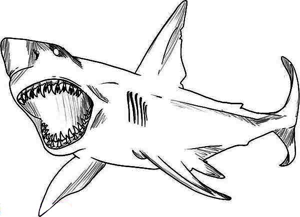 great white shark coloring pages aaldtk