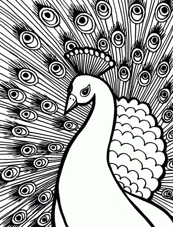 peacock with stunning plumage feather coloring page kids play color