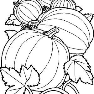 three cherry in one stalk coloring page three cherry in one stalk