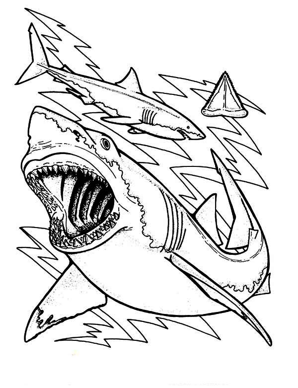 teeth of shark colouring pages
