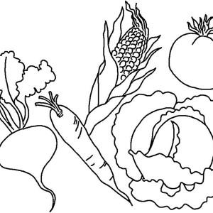 cornstalk in the corn field coloring page kids play color