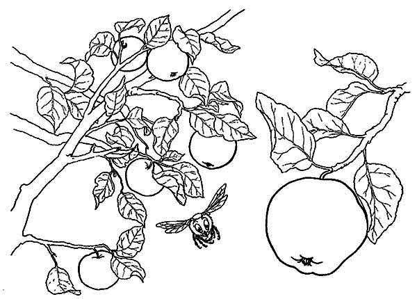 apple tree and a bee coloring page kids play color