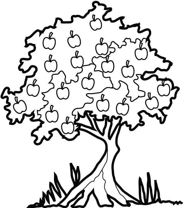 apple tree in the forest coloring page kids play color