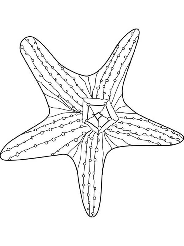 awesome starfish coloring page kids play color