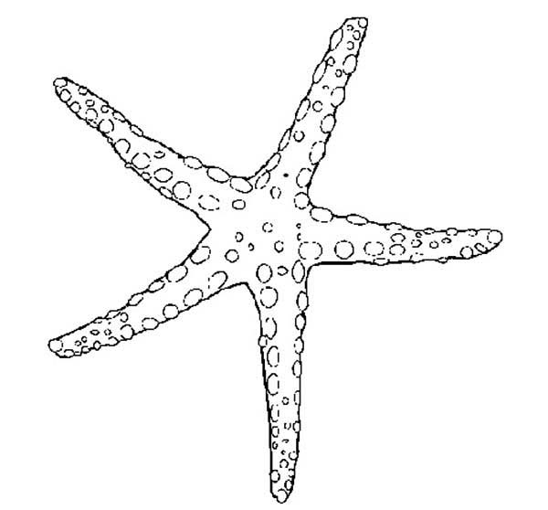 walking starfish coloring page kids play color