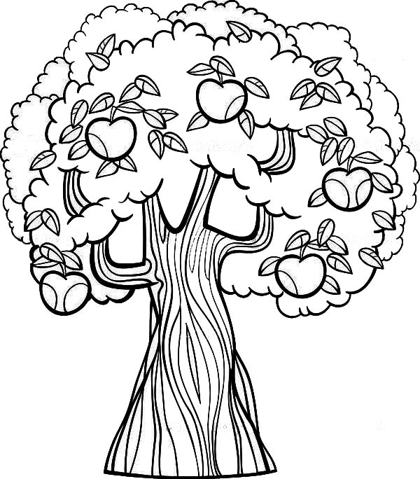 old apple tree coloring page kids play color