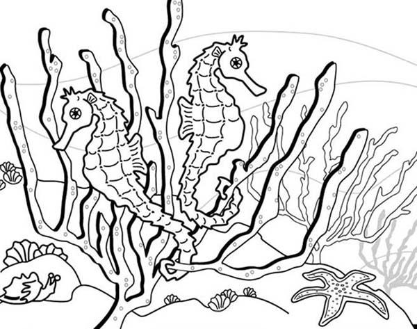 seahorse habibat is around seaweed coloring page kids play color