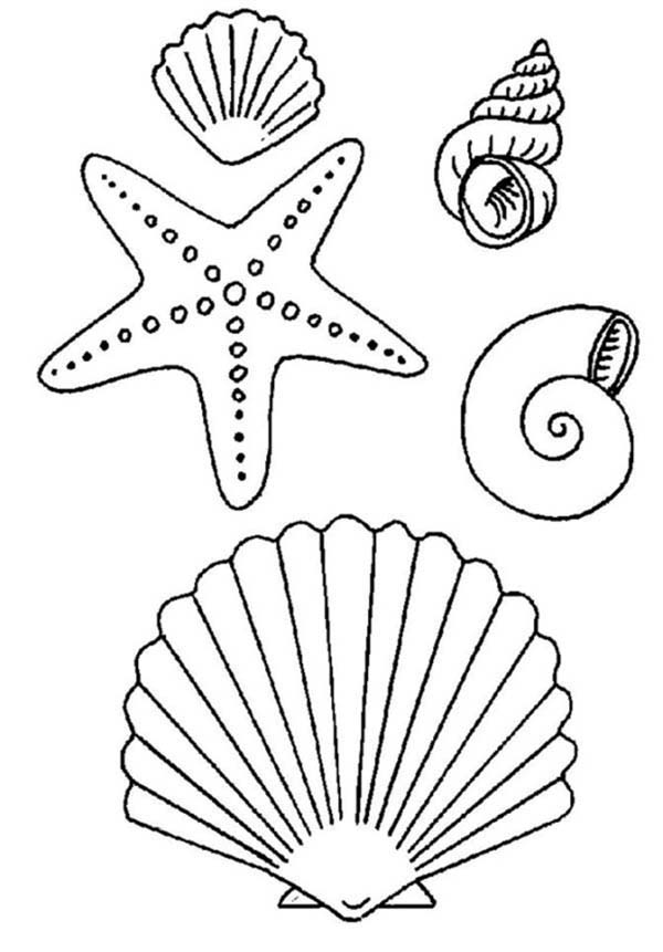 starfish and sea shell coloring page kids play color