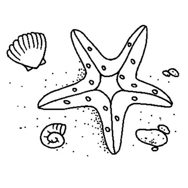 starfish and two shell coloring page kids play color