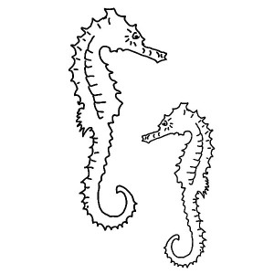 the anatomy of seahorse coloring page the anatomy of seahorse