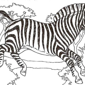 short zebra coloring page short zebra coloring page kids play color
