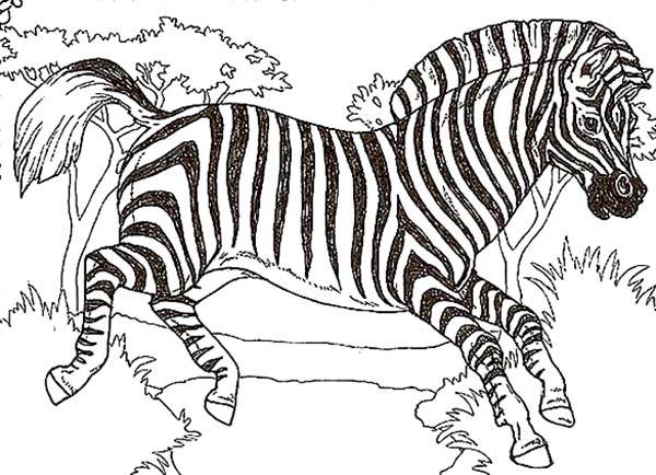 african zebra coloring page kids play color