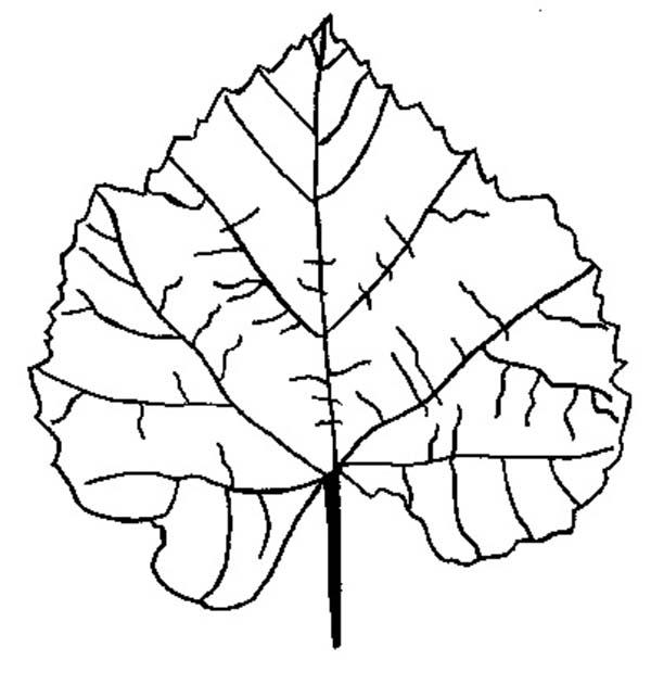 birch fall leaf coloring page kids play color