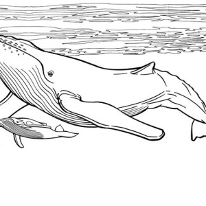 wally the blue whale coloring page wally the blue whale coloring